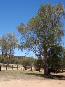 alicesprings05